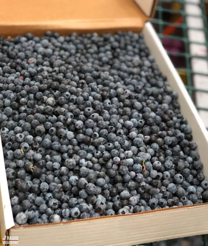 The best blueberries go into boxes.