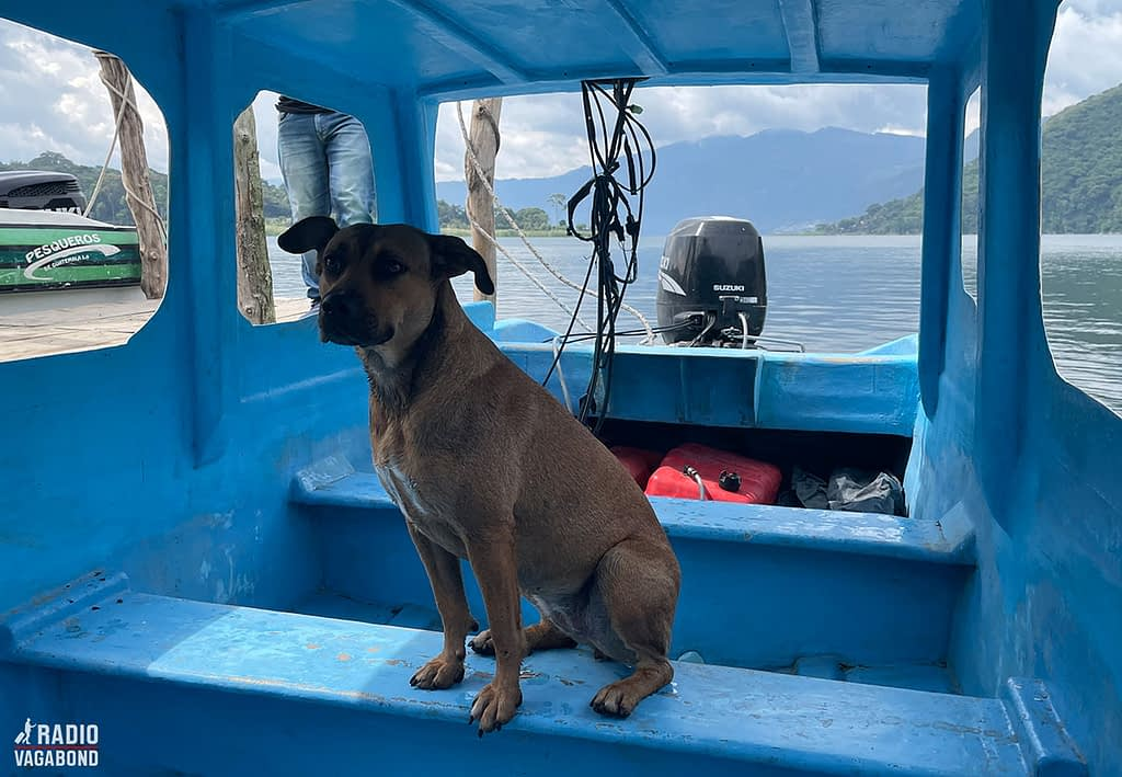 The dog Catzij is used to boating the lake.